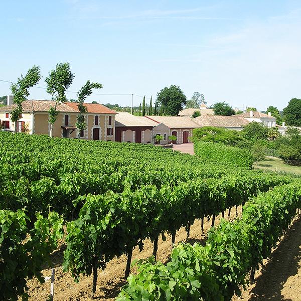 Vue des vignes et du château